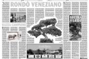 Dal rondò veneziano ai venerabili olivastri